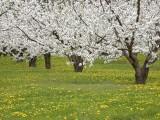 Picture: Пролетта настъпва истински за Великден