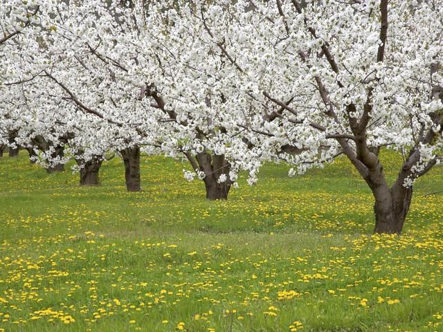 Пролетта настъпва истински за Великден
