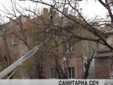 Санитарна сеч започва в София след Великден