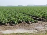 Picture: Фермерите подават молби за финансиране до днес