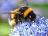 """Picture: Норвежки еколози ще правят """"зелен път"""" за пчелите"""