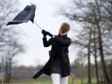 Picture: Много ветровито и студено за края на май
