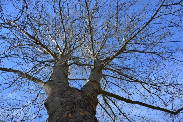 The Tree & The Sky