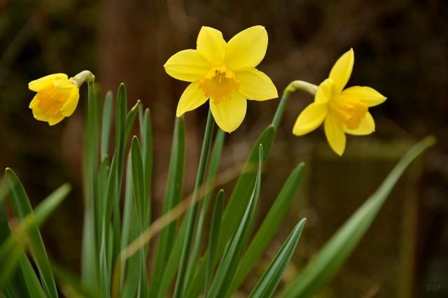 Narcis 2