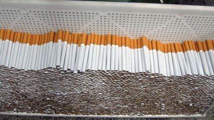 cigari bgnes
