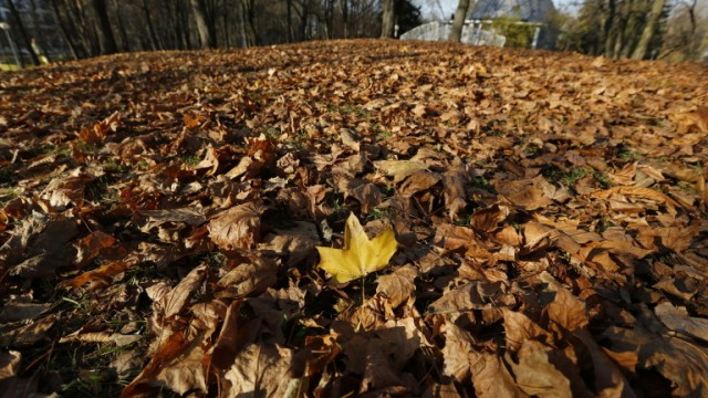 epa07945584 A yellow leave is seen on seasonal leaves in a central park on a sunny day in Minsk, Belarus, 24 October 2019. The temperature in Minsk reached 15 degrees Celsius, local media report.  EPA/TATYANA ZENKOVICH