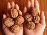 Picture: Орехите повишават плодовитостта на мъжете