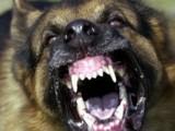 Picture: Шок и Ужас! Жена пищи, глутница кучета я разкъсват!