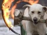 Picture: Куче запали къща, пожара гасиха 18 пожарни и 140 доброволци