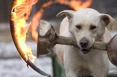 Куче запали къща