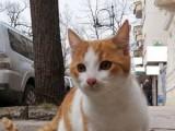 Picture: Задържаха киберпрестъпник благодарение на котка