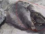 Picture: Мистерия: Вълни изхвърлиха на плаж морско чудовище (ВИДЕО)