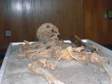 Picture: Показват в НИМ скелета на вампира от Созопол