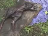 Миниатюрен динозавър
