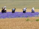 Picture: От 1 януари 2014: Кой ще купи българските ниви?