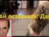 Picture: Вижте кога Орешарски ще подаде оставка! (Забавно ВИДЕО)