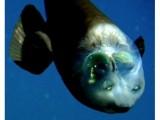 Призрачната риба