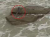 Picture: УНИКАЛНО! Вижте жива русалка в морето (ВИДЕО)
