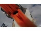 Picture: Последното, което ще видите, преди да Ви изяде пингвин!
