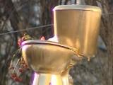 """Picture: """"Златна"""" тоалетна в Киев """"провокира"""" съвестта на управляващите"""