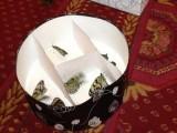 пеперуди в парламента