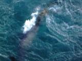 Picture: Рибар успя да снима русалка край гръцки остров?!