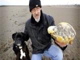 Picture: Куче откри необикновено съкровище по време на разходка