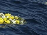 Десетки мъртви тела в морето край Либия