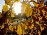Picture: Изминалият октомври е бил петият рекордно топъл месец на планетата