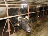 Picture: Фермерите да подават сигнал, ако някой ги рекетира
