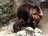 Picture: Столична община ремонтира зоопарка със 700 хил. лева