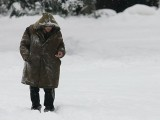 Picture: Софийското кметство с грижа за бездомните