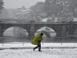 Picture: Снежният ад в Япония взе пет жертви