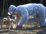Picture: В Бургас е регистриран птичи грип