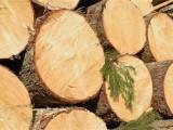 Готвят временна забрана за износ на дървесина