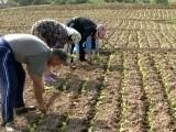 Picture: Производители на тютюн искат яснота за субсидиите в сектора