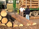 Picture: Износители на дървесина излизат на протест
