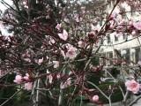 Днес е първият ден от пролетта