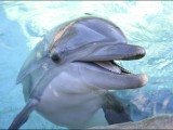 Акция по спасяване на делфини в Япония