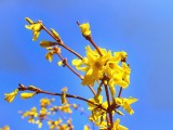 Picture: Първи наистина пролетни дни – слънчево и топло