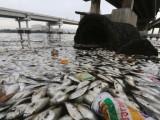 19 тона мъртва риба край Рио де Жанейро