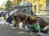 Picture: Властта се захваща с бездомните кучета